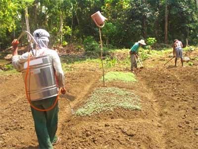 NPA does collective farming